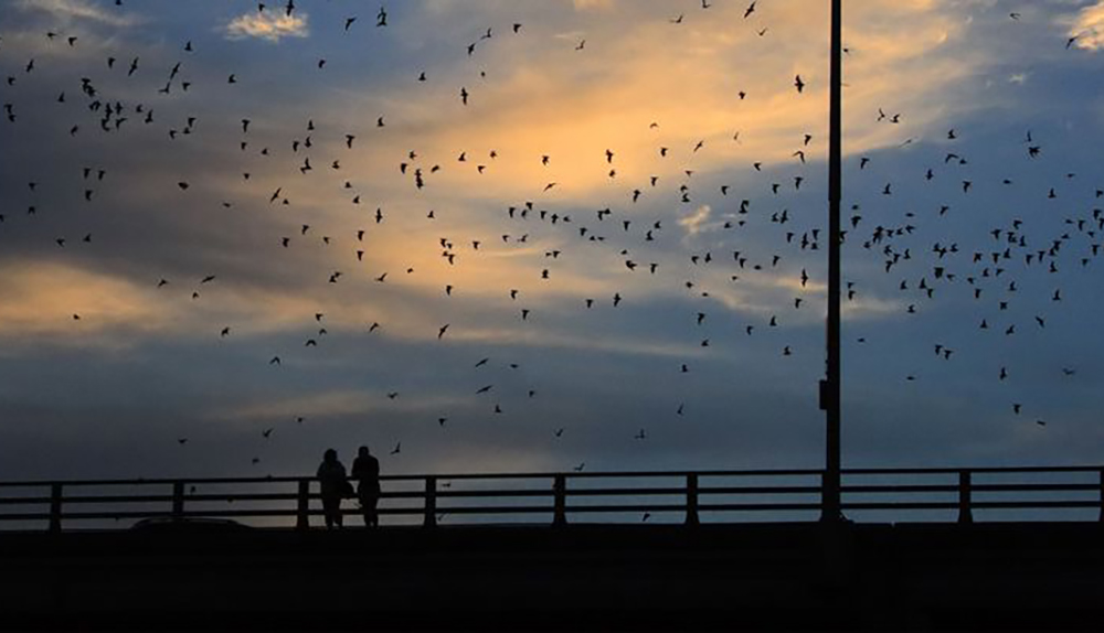 Two people watching a swarm of bats from the Congress Avenue Bridge at sunset