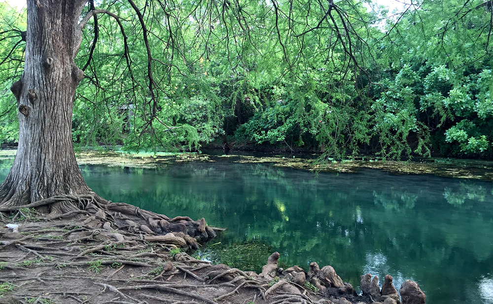 The San Marcos River in San Marcos, TX